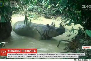 Ванна для носорога: на острові Ява зафільмували водні процедури рідкісної тварини