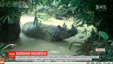Ванна для носорога: на острове Ява сняли водные процедуры редкого животного