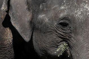 Ходят кругами возле воды и умирают: в Ботсване массово гибнут слоны