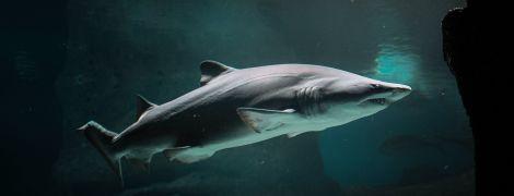 Зубаті очі: вчені виявили у акул дивний захисний шар очного яблука