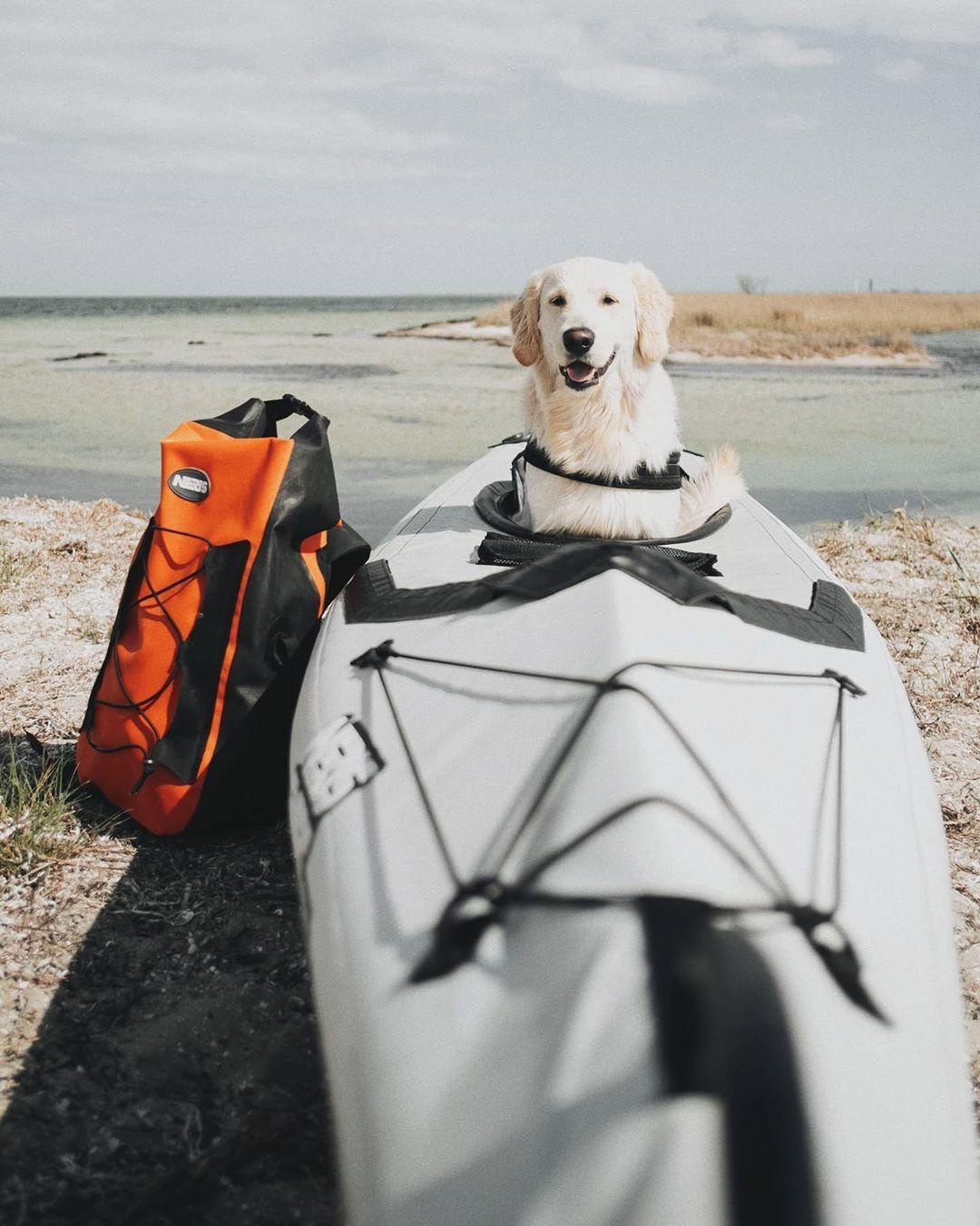 джарилгач каяк і пес