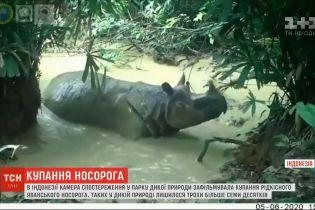 В Индонезии видео купания яванского носорога стало хитом в соцсетях
