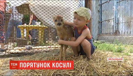 У Хмельницькому рятують молоду косулю, яка потрапила в пастку браконьєрів