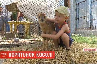 В Хмельницком спасают молодую косулю, которая попала в ловушку браконьеров
