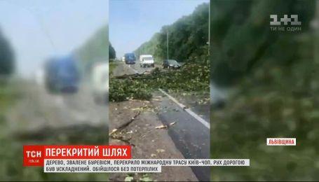Поваленное ураганом дерево перекрыло международную трассу Киев-Чоп