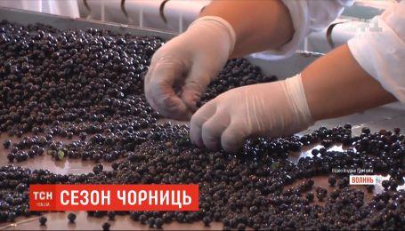 Чорне золото: скільки в Україні коштує цьогорічна чорниця