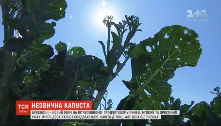 Новий овоч: ринок в Україні завойовує броколіні