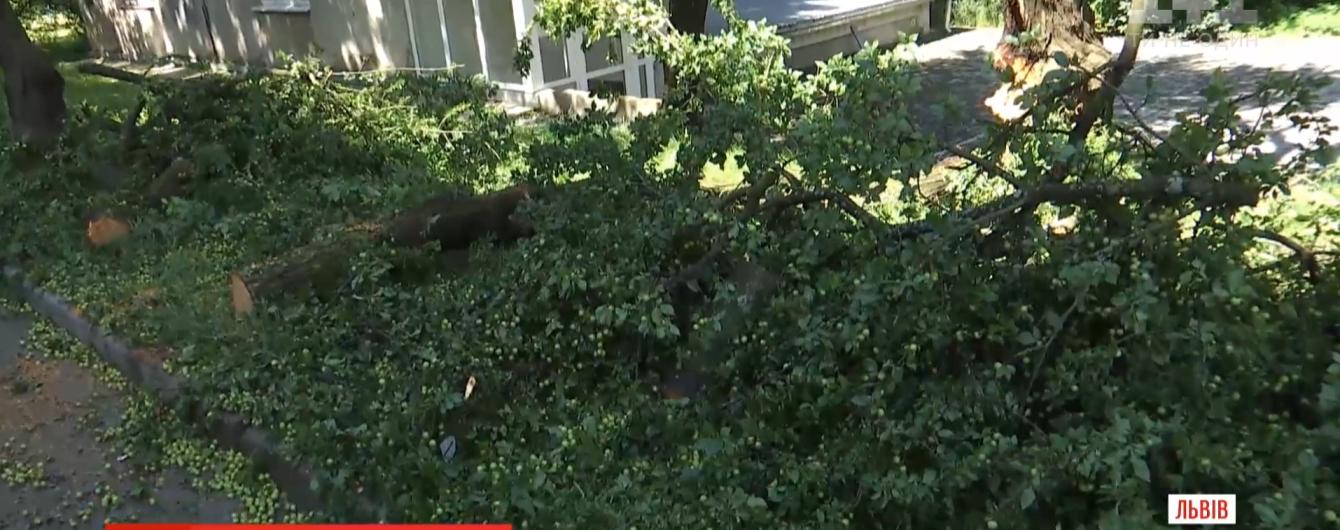 У Львові на літню жінку рухнула гілка дерева