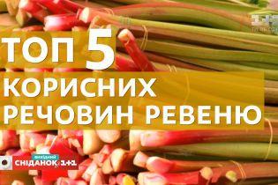 Ревень, румбарбар: чем полезно это растение и с чем его едят