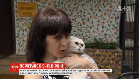 Кішку Еліс, яку дістали з-під завалів будинку на Позняках, віддали у сім`ю