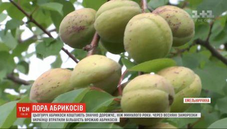 Из-за весенних заморозков в Украине малый урожай абрикосов