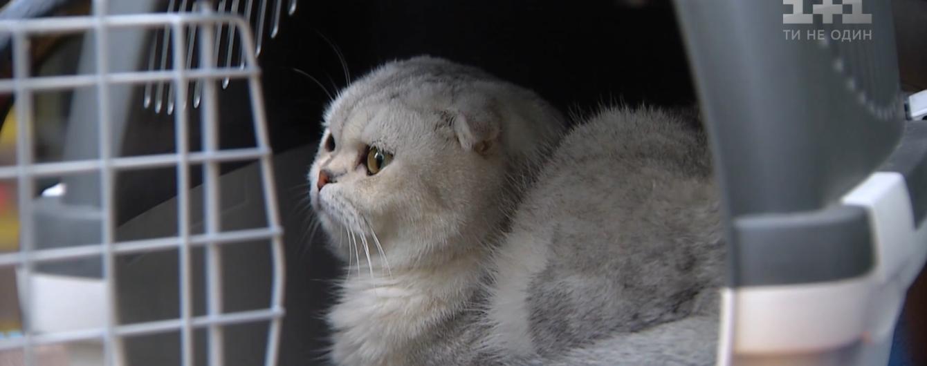 Четыре кошки пережили обвал после взрыва дома на столичных Позняках: истории спасения из-под руин