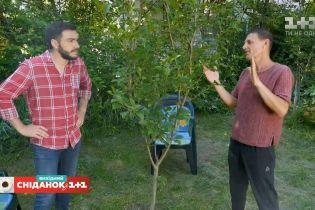 Як сформувати правильну крону дерев