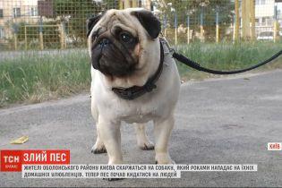 Обережно, злий пес: собака тримає в страху двір на столичній Оболоні