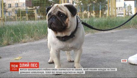 Осторожно, злой пес: собака держит в страхе двор на столичной Оболони