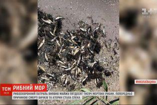 У Миколаївській області майже кілометр берегової смуги лиману встелений мертвою рибою