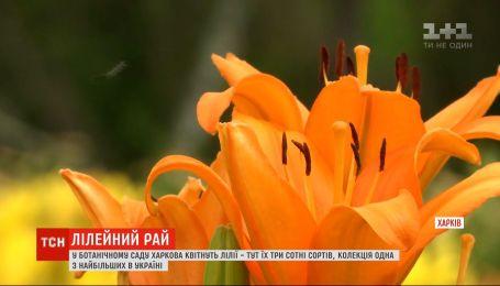 Квітковий рай: у ботанічному саду Харкова квітнуть лілії