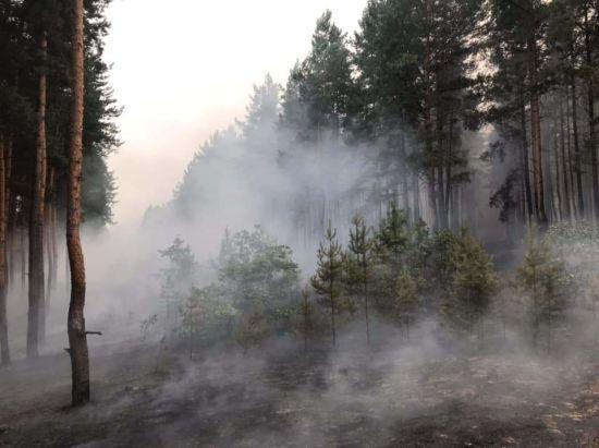 """Бойовики пообіцяли запровадити режим """"тиші"""" на час гасіння пожежі у Луганській області"""