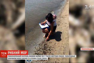 В Николаевской области зафиксировали массовую гибель рыбы