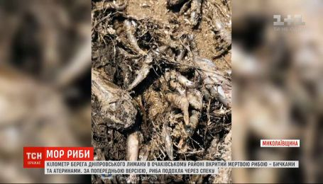 У Миколаївській області місцеві жителі збирають у лимані мертву рибу