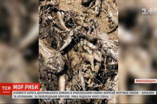В Николаевской области местные жители собирают в лимане мертвую рыбу