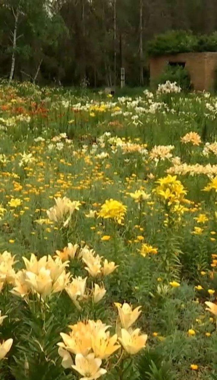 Цветочный рай: в ботаническом саду Харькова расцвела одна из крупнейших в Украине коллекций лилий