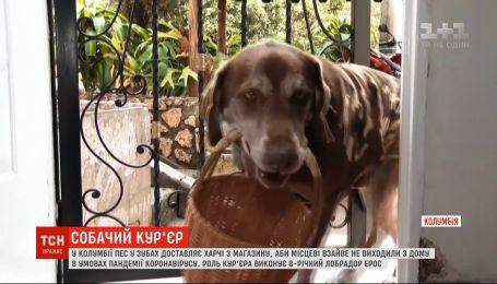 Собача доставка: пес у зубах розносить харчі з магазину, щоб люди не покидали домівки