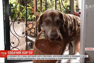 Собачья доставка: пес в зубах разносит продукты из магазина, чтобы люди не покидали дома