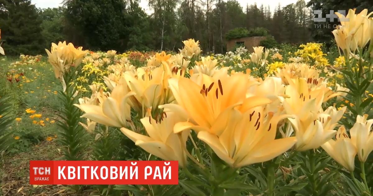 Цветочный рай: в ботаническом саду Харькова расцвела одна из крупнейших коллекций лилий в Украине