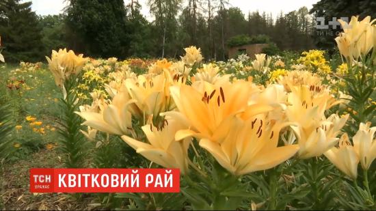 Квітковий рай: у ботанічному саду Харкова розквітла одна з найбільших колекцій лілій в Україні