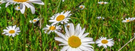 Тепло і сухо: прогноз погоди в Україні на п'ятницю, 10 липня