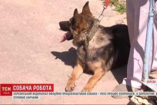 Херсонский водоканал официально трудоустроил собачку по имени Рекс
