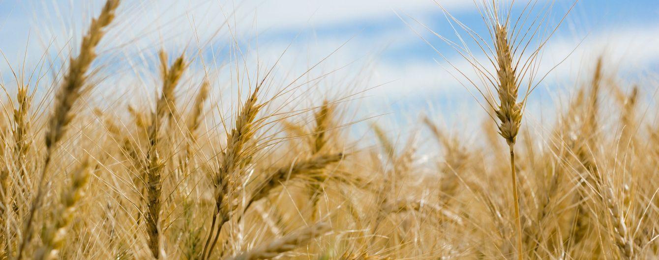 Фермеры прогнозируют плохой урожай зерновых