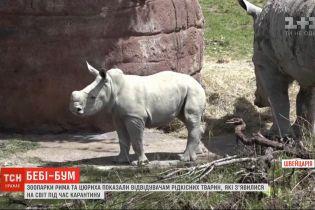Зоопарки Рима та Цюриха показали відвідувачам рідкісних тварин, які народилися під час карантину