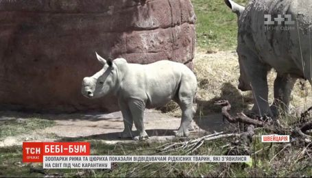 Зоопарки Рима и Цюриха показали посетителям редких животных, которые родились во время карантина
