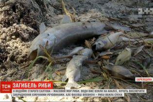 В Харьковской области зафиксирован массовый мор рыбы