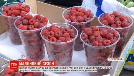 Сезон малини: який в Україні урожай та які ціни на ягоду