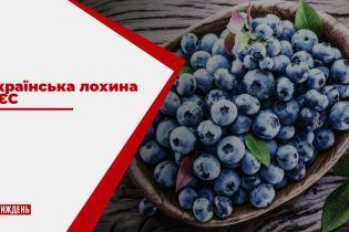 Україна за кілька років може стати одним з головних постачальників лохини в ЄС