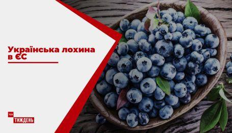 Украина через несколько лет может стать одним из главных поставщиков голубики в ЕС