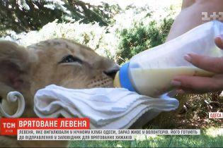Левеня, яке вигулювали у нічному клубі Одеси, було врятоване зоозахисниками