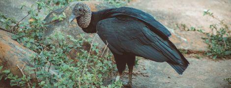 Найбільший у світі птах майже не махає крилами у польоті - дослідження