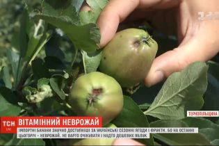 Погодні умови та логістика: чому імпортні фрукти дешевші, ніж українські