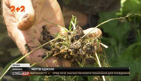 Массовый мор пчел наблюдается во Львовской области