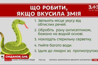 Наскільки небезпечні змії в Україні і що робити у випадку укусу
