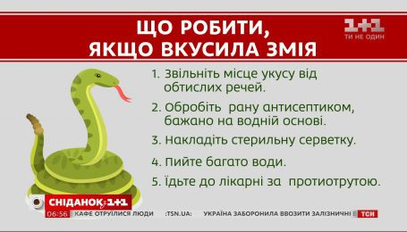 Насколько опасны змеи в Украине и что делать в случае укуса