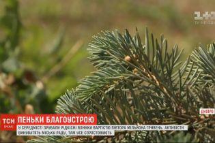 У центрі Дніпра зрубали понад десяток блакитних ялинок