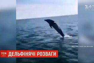 В Железном Порту дельфин устроил шоу для отдыхающих