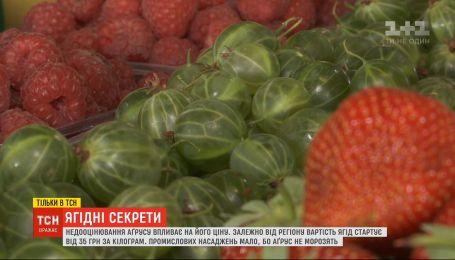 Сезон крыжовника: сколько стоит ягода и что из нее можно приготовить