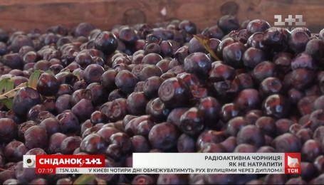 Осторожно, радиоактивная черника: как не купить опасную ягоду