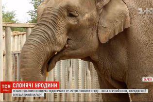 В Харькове отметили 22-летие первого слона, рожденного в независимой Украине